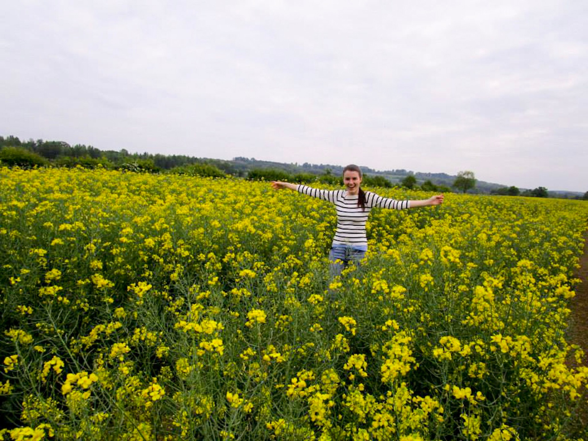 Yellow rapeseed flowers fields in the Cotswolds