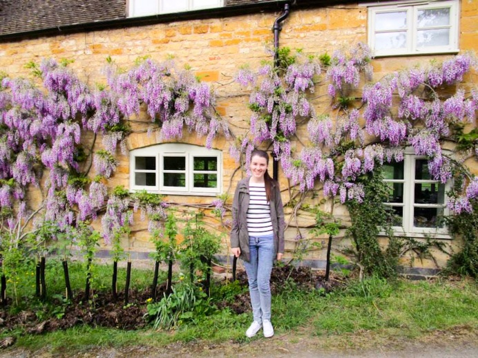 Wisteria hysteria in the Cotswolds