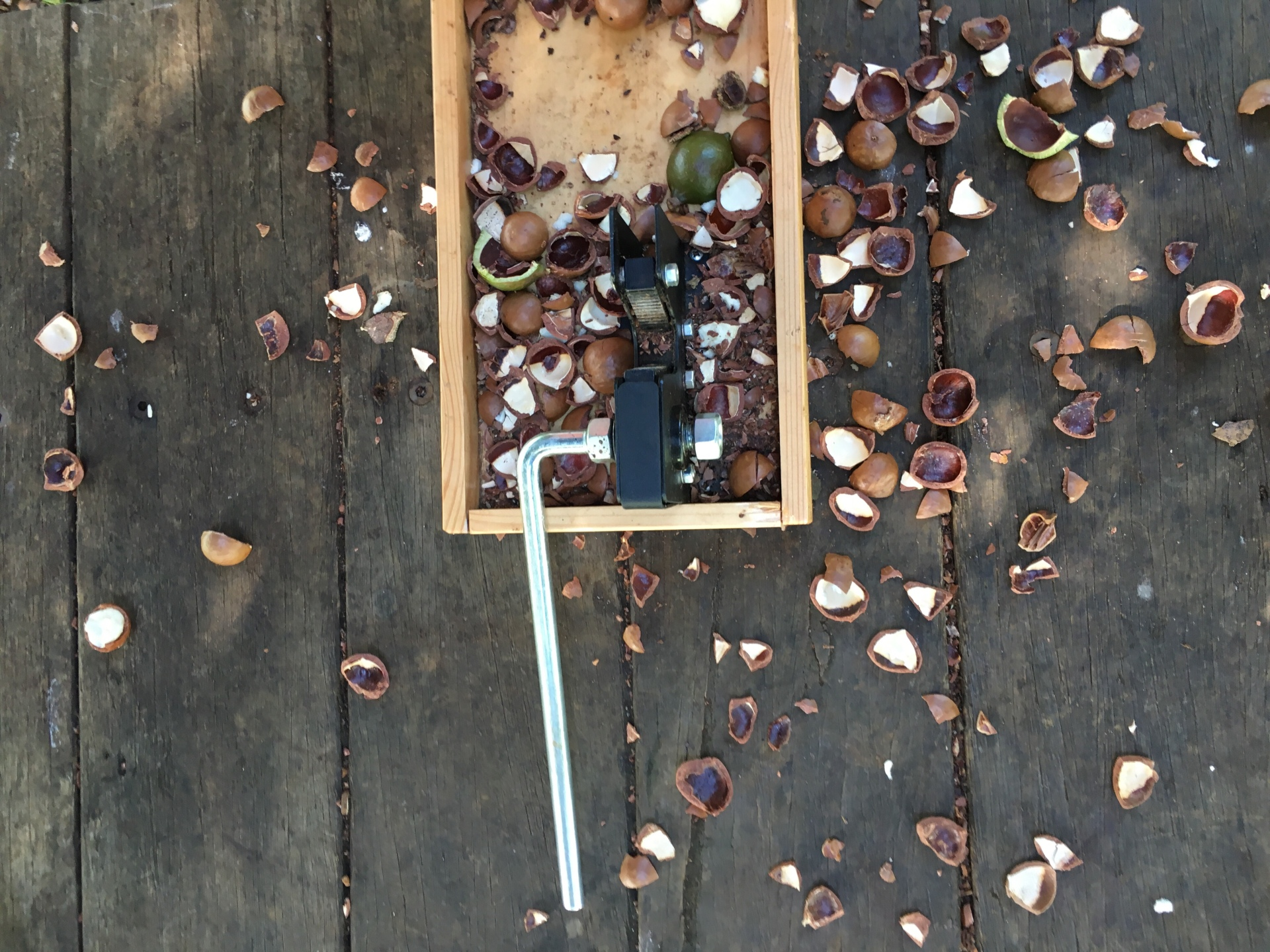 Cracking macadamia nuts at the farm at byron bay